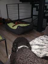 Neu ist auch, dass Fozzie in meinem Bett liegt.