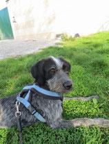 Hundeerfahrung: nicht zwingend nötig
