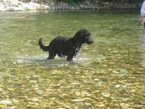 Ja, eben... Ich bin ein Pseudo-Wasserhund.