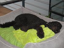 Und nach so einem Powertag, falle ich todmüde in eines meiner Hundebettli!