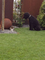 Im Garten bleibe ich dann gar nicht cool! Warum?