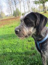 Stubenrein: noch nicht - das lernen Tierheimhunde aber flux...