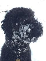 Ich sehe aus wie Hektor - aber ich liiii-hiiiebe Schnee!