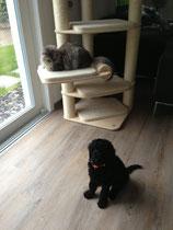 Ich kleines Hundchen und ein kleines Kätzchen