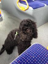 Erste Minute im Bus - DAS war aufregend!