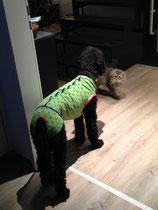 Fibi schaut mich doch etwas verwundert an. Dabei ist mein Pyjama soooo schön!
