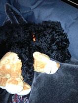Ich brauche Teddy zum Kuscheln :)