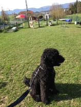 Hundeschule Idefix in Kräiligen - mein Paradies auf Erden!