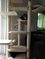 Irgendwie gehört der Katzenbaum auch mir!