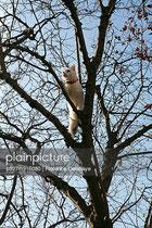 Acacia; chat; hiver; ciel bleu;confiance; aventure;