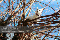 Acacia; chat; hiver; ciel bleu;confiance