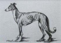 Heikes Hunde 1