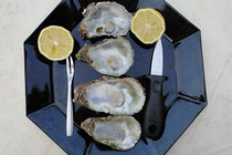 Leere Austernhälten