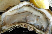 geöffnete Auster