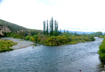 Tangariro river, LA rivière à truites
