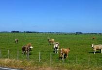 traitement du lait: unités de production