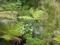 végétation subtropicale