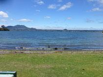 Lac Taupo - acacias bay