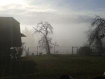 Zuhause kriecht der Nebel langsam höher...