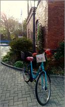 feewerk, Lenkertasche, Fahrradtasche, Hollandrad, Fahrrad, Insel, Katze, Rad
