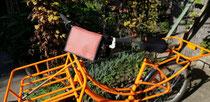 feewerk, Lenkertasche, Fahrradtasche, Hollandrad, Fahrrad, Lastenrad