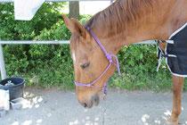 Während der Behandlung döst das Pferd immer wieder einmal, dazwischen kaut und gähnt es.