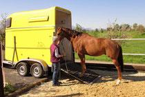 """mit der Zeit soll das Pferd lernen, dass es """"alleine"""" einsteigen kann"""