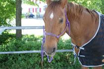 Das Pferd ist ruhig, aber aufmerksam.