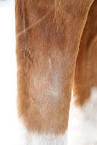 """Einjährige Narbe (Schlagverletzung), die jetzt im Frühling beim Haarwechsel wieder """"aktiv"""" wurde - die Haut ist schuppig, das Haar fettig und """"struppig"""", die Narbe selbst """"krümmelig"""""""