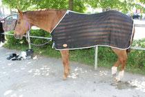 Das Pferd steht entspannt da, der Blutegeleinsatz stört es in keiner Art und Weise
