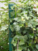 Eisenpfosten - Mobilane Fertighecke® - Pflanzfertige Heckenelemente - Fertiger Sichtschutz - Garten Bronder©