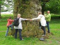 Wuchtiger Baum in Stourhead Garden