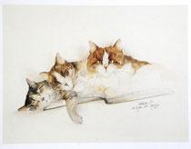Kunstdruck, Katzen