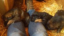 die Beine sind auch belegt  und schlafen der Birgit bald ein