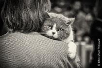 Blotti sur ton épaule