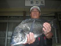 5月11日 磯釣りで三池さん ガバチヌ51㎝