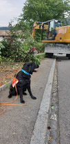 Auch Spürhund Yuma wartet auf ihren nächsten Einsatz