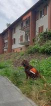 Durch die Arbeit der Spürhunde konnte sichergestellt werden, dass keine Igel(babys) sterben mussten