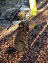 Verdrehter Kopf - ich musste doch beobachten, wie ein Blatt vom Baum fällt.