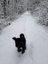 Habe ich schon gesagt, dass ich Schnee toll finde?