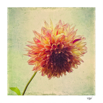 """""""Small Grandness"""" textured color photograph"""