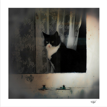 """""""One cat in the window"""" photograph taken in Amsterdam in 2014"""