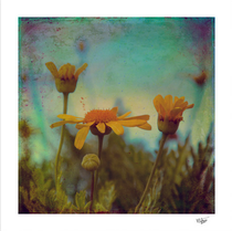 """""""The Beauty of Simple Things"""" textured and hand painted daisies photograph"""