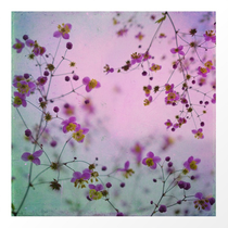"""""""Vintage little flowers"""" Artistic floral photograph available for sale in Society6, Redbubble, Curioos and Displate shops"""