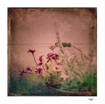 """""""Floral Joy"""" textured color photograph"""