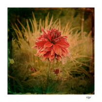 """""""Hand painted vintage flowers"""" Hand painted photograph"""