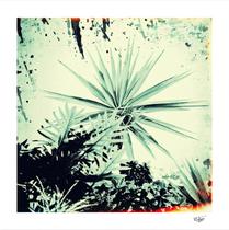 """Abstract Urban Garden"" artistic urban garden photograph, hand painted and textured"