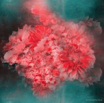 """Abstract Red Flowers"" digital art, photography, digital manipulation, soul art"