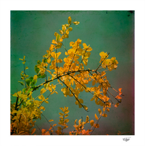 """""""Autumn"""" Textured and Hand painted photograph"""