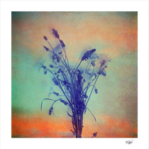 """""""Small Beauties of Nature"""" Hand painted vintage photograph"""